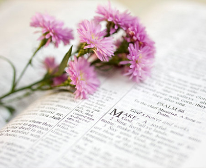 Flower and Bible